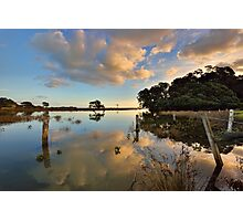 Waiaro Mangrove Reflections Photographic Print