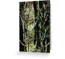 Lichen tree Greeting Card
