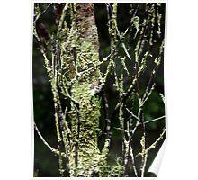 Lichen tree Poster