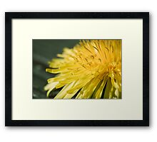 Day 258 - 24th March 2012 Framed Print