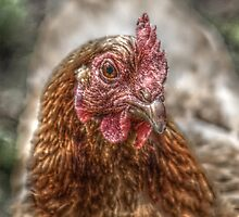 HDR chicken case by blueandwhite80