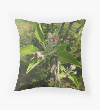 Apple Tree Blossoms Throw Pillow