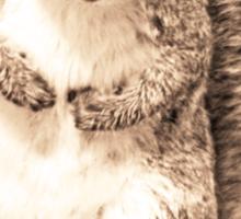 Squirrel t-shirt Sticker