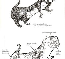 Textbook Hyperactive Ferret by Stuart F Taylor