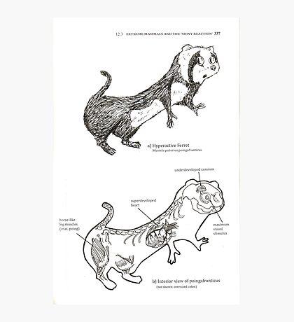 Textbook Hyperactive Ferret Photographic Print