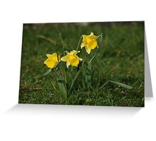 Daffodils in the sun Greeting Card