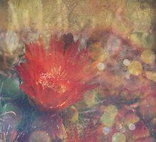Cactus Flower Textured by lesanchez
