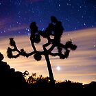 Venus and the Joshua Tree by Troy Dalmasso