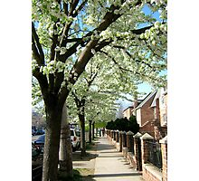 Spring afternoon in Bronx, New York City Photographic Print