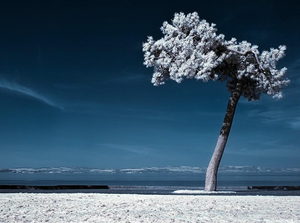 The Lone Rider (Infrared) by Don Alexander Lumsden (Echo7)