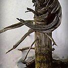 Dead Pine at Hidden Lake by Yukondick
