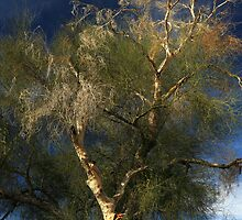 Colorado River Tamarisk by James Eddy