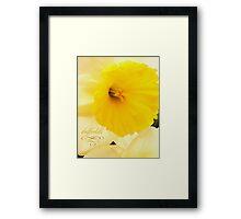 daffodils 2012 Framed Print