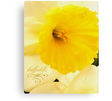 daffodils 2012 Canvas Print
