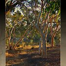 Afternoon Light by Karen Stackpole