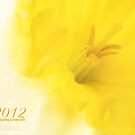 2012 the Spring Collection by thinkingoutloud