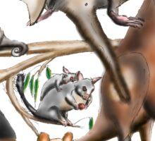 Aussie Fauna Sticker