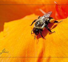 Pollen Fuel by DigitallyStill