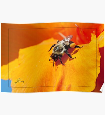 Pollen Fuel Poster