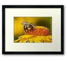 Pollen Bathing Framed Print