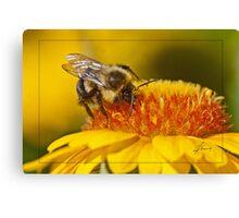 Pollen Bathing Canvas Print
