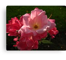 Rally round the roses Canvas Print