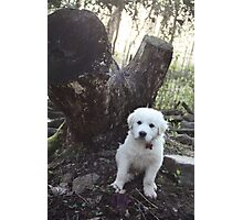Torro Stump Guardian Photographic Print