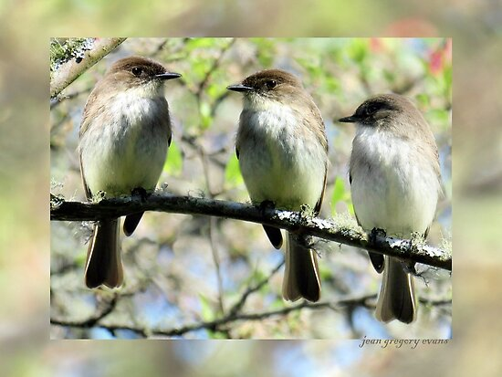 Little Brown Birds Of Spring by Jean Gregory  Evans