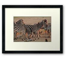 Go on, scratch my belly! Framed Print
