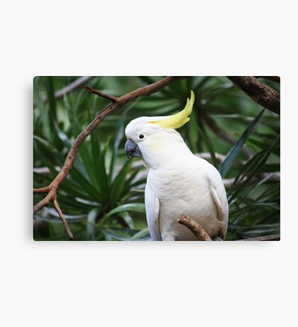 """""""Hey, where are my seeds?"""" Canvas Print"""