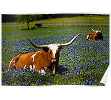 Stop and smell the bluebonnets! Poster