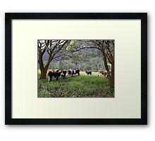 Gleniffer Cows Framed Print