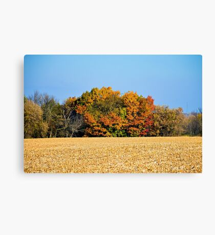 Autumn's Last Stand Canvas Print
