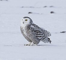 Chilly by Heather King