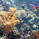 coral and fish by sharon wingard