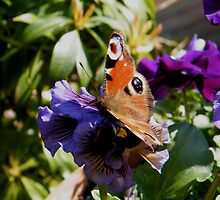 Pansy Pal by ElsT