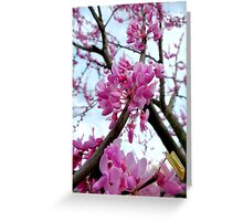 Redbud in March Greeting Card