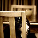 Hiding in plain sight by Lynn Starner