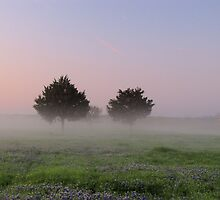 Morning Mist Above the Bluebonnets - Denison Dam, Texas, USA by aprilann