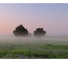 Morning Mist Above the Bluebonnets - Denison Dam, Texas, USA Photographic Print