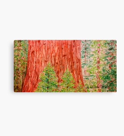 California Redwood Canvas Print