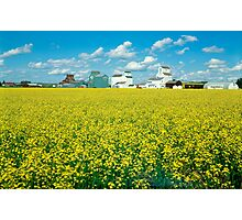 A sea of yellow Photographic Print