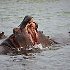 Hippos share a pash? by Jessica Henderson