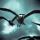 Sea Gulls - Renard by AlanJLanders