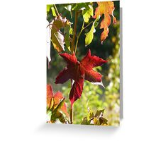 Autumn Collection Greeting Card