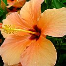 Danielle's Hibiscus by Penny Smith