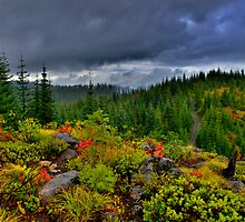 A Peek Over The Top by Charles & Patricia   Harkins ~ Picture Oregon