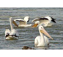 Pelican Party Photographic Print