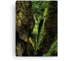 Oneonta Gorge ~ Part One Canvas Print