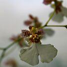 Orchid 7 by Joy Fitzhorn